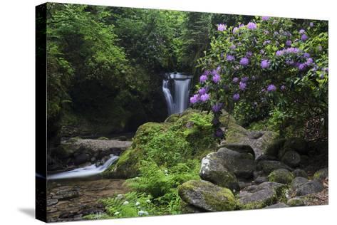 Germany, Baden-WŸrttemberg, Black Forest, Grobbach, Geroldsau Waterfall-Andreas Keil-Stretched Canvas Print