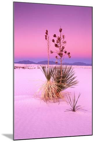 USA, New Mexico, of White Sand National Monument, Desert, Soaptree Yucca-Frank Lukasseck-Mounted Photographic Print