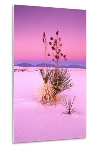USA, New Mexico, of White Sand National Monument, Desert, Soaptree Yucca-Frank Lukasseck-Metal Print