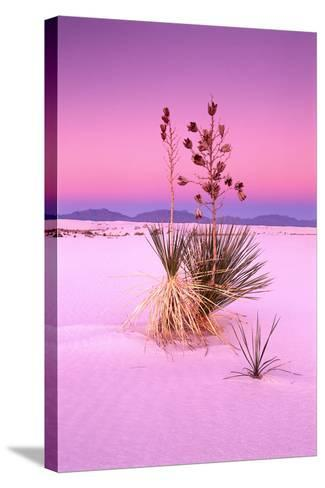 USA, New Mexico, of White Sand National Monument, Desert, Soaptree Yucca-Frank Lukasseck-Stretched Canvas Print