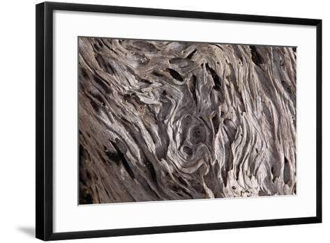 Tree, Wood, Weather-Beaten-Catharina Lux-Framed Art Print