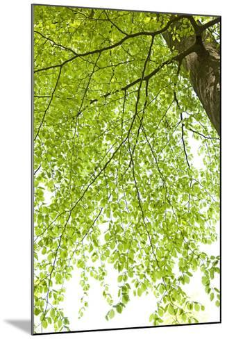 Tree, Forest, Leaves, Plants-Nora Frei-Mounted Photographic Print