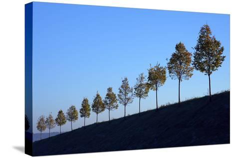 Hills, Tree Row, Autumn-Ronald Wittek-Stretched Canvas Print