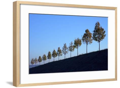 Hills, Tree Row, Autumn-Ronald Wittek-Framed Art Print