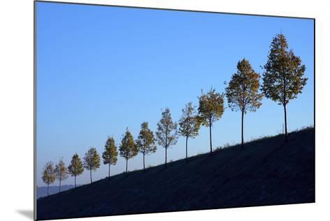 Hills, Tree Row, Autumn-Ronald Wittek-Mounted Photographic Print