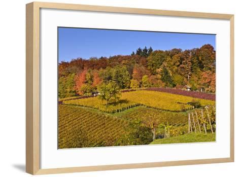 Germany, Hesse, Odenwald (Region), Bergstrasse (Region), Heppenheim (Town), Vineyards, Autumn Mood-Udo Siebig-Framed Art Print