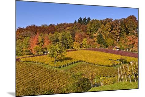 Germany, Hesse, Odenwald (Region), Bergstrasse (Region), Heppenheim (Town), Vineyards, Autumn Mood-Udo Siebig-Mounted Photographic Print