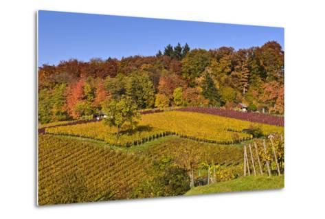 Germany, Hesse, Odenwald (Region), Bergstrasse (Region), Heppenheim (Town), Vineyards, Autumn Mood-Udo Siebig-Metal Print