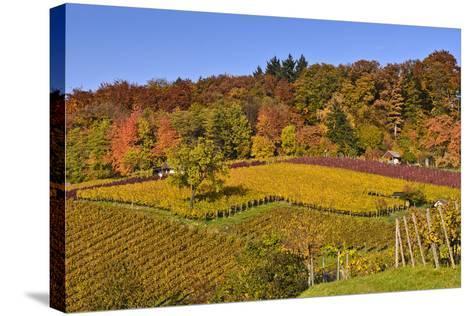 Germany, Hesse, Odenwald (Region), Bergstrasse (Region), Heppenheim (Town), Vineyards, Autumn Mood-Udo Siebig-Stretched Canvas Print