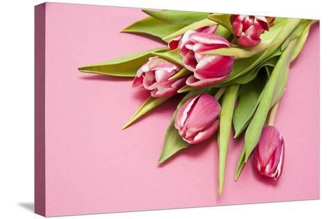 Bouquet, Tulips, Pink, Table-Sebastian Scheuerecker-Stretched Canvas Print