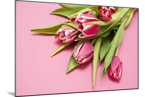 Bouquet, Tulips, Pink, Table-Sebastian Scheuerecker-Mounted Photographic Print