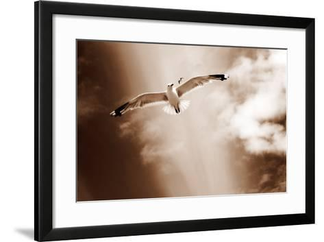 White Sea Gulls Flying over the Dunes in the Sky in Rich Sepia Tones-Alaya Gadeh-Framed Art Print