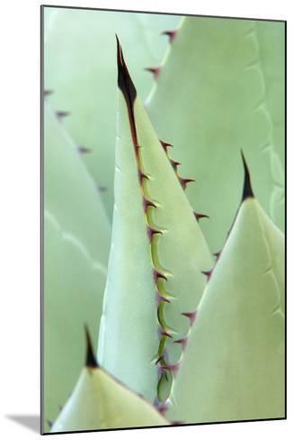 Agave, Agave Parrasana, Detail, Nature, Botany-Herbert Kehrer-Mounted Photographic Print