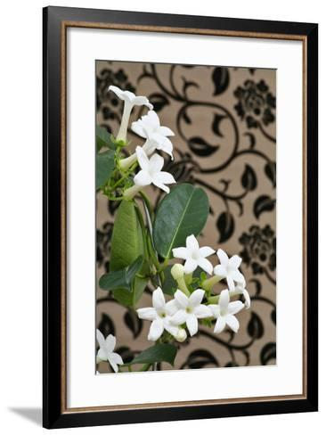 Madagascar Jasmine or Waxflower, Blossoms, Indoor Plant, Climbing Plant-Sweet Ink-Framed Art Print