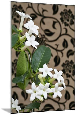 Madagascar Jasmine or Waxflower, Blossoms, Indoor Plant, Climbing Plant-Sweet Ink-Mounted Photographic Print