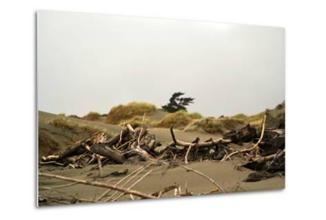 New Zealand, North Island, Foxton Beach, Stranded Goods-Catharina Lux-Metal Print