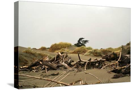 New Zealand, North Island, Foxton Beach, Stranded Goods-Catharina Lux-Stretched Canvas Print