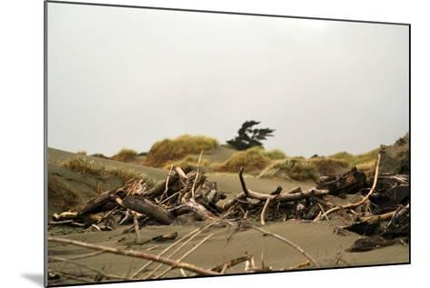 New Zealand, North Island, Foxton Beach, Stranded Goods-Catharina Lux-Mounted Photographic Print
