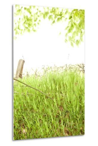 Spring, Plants, Grass, Nature-Nora Frei-Metal Print