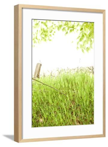 Spring, Plants, Grass, Nature-Nora Frei-Framed Art Print