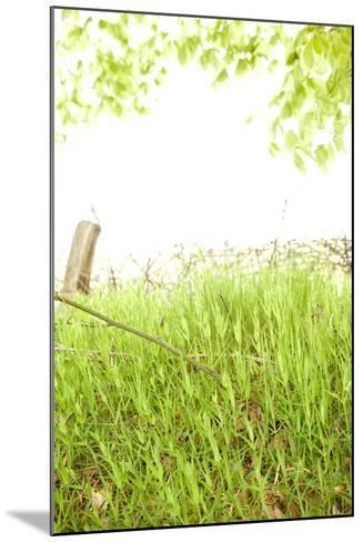Spring, Plants, Grass, Nature-Nora Frei-Mounted Photographic Print