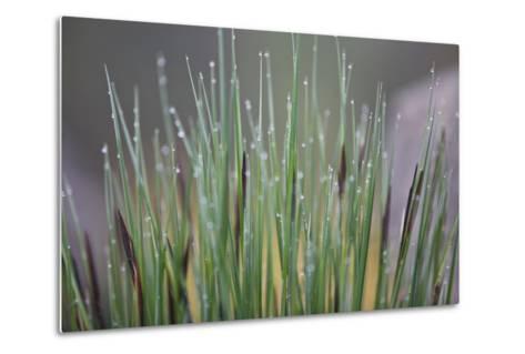 Grass, Drop of Water, Rope-Rainer Mirau-Metal Print