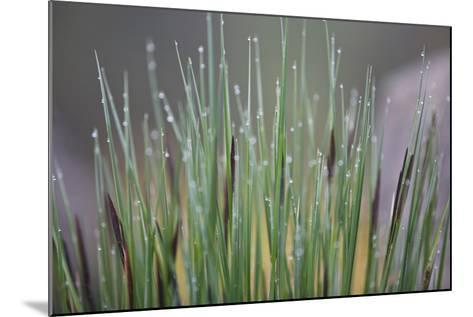 Grass, Drop of Water, Rope-Rainer Mirau-Mounted Photographic Print