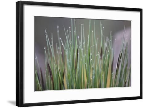 Grass, Drop of Water, Rope-Rainer Mirau-Framed Art Print