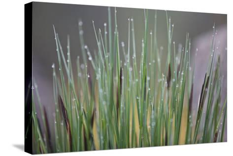 Grass, Drop of Water, Rope-Rainer Mirau-Stretched Canvas Print