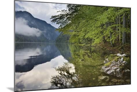 Austria, Styria, Salzkammergut (Region), Toplitzsee (Lake), Morning Mood, Lake, Shore-Rainer Mirau-Mounted Photographic Print