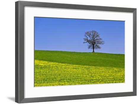 Germany, Bavaria, Upper Bavaria, Degerndorf (Village), Spring Meadow, Oak-Udo Siebig-Framed Art Print