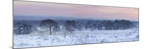 Germany, North Rhine-Westphalia, Wahner Heide, View from the Telegrafenberg in Winter at Sunrise-Andreas Keil-Mounted Photographic Print