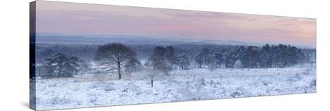 Germany, North Rhine-Westphalia, Wahner Heide, View from the Telegrafenberg in Winter at Sunrise-Andreas Keil-Stretched Canvas Print