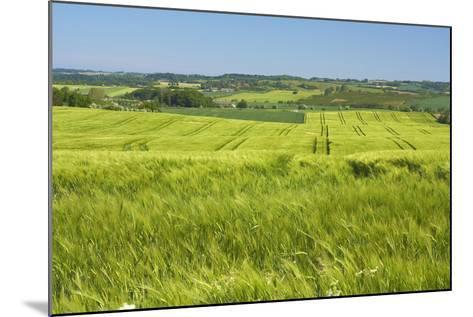Denmark, Funen, Wheat Fields, Near Horne-Chris Seba-Mounted Photographic Print