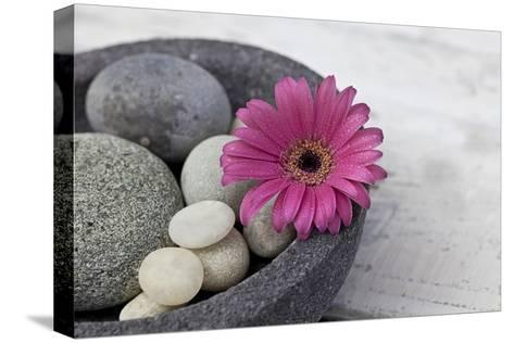 Gerbera Blossom, Shell, Stones-Andrea Haase-Stretched Canvas Print