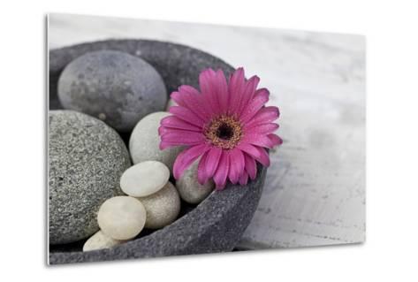 Gerbera Blossom, Shell, Stones-Andrea Haase-Metal Print