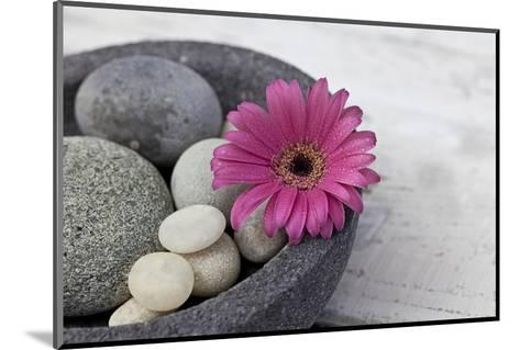 Gerbera Blossom, Shell, Stones-Andrea Haase-Mounted Photographic Print