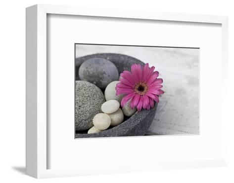 Gerbera Blossom, Shell, Stones-Andrea Haase-Framed Art Print