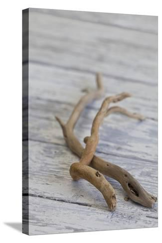 Driftwood, Wood, Branches, Still Life-Andrea Haase-Stretched Canvas Print
