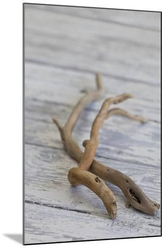 Driftwood, Wood, Branches, Still Life-Andrea Haase-Mounted Photographic Print