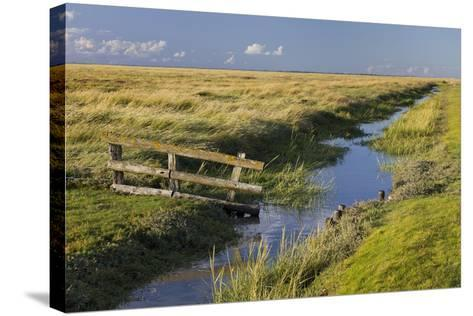 Fence on a Salt Meadow, Westerhever (Municipality), Schleswig-Holstein, Germany-Rainer Mirau-Stretched Canvas Print