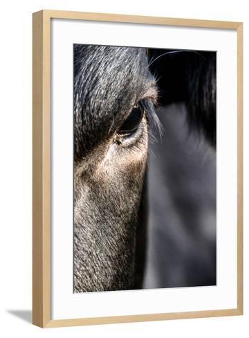 Cow, Detail, Eye-Jule Leibnitz-Framed Art Print