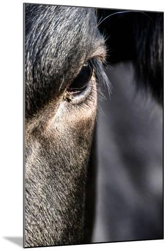Cow, Detail, Eye-Jule Leibnitz-Mounted Photographic Print