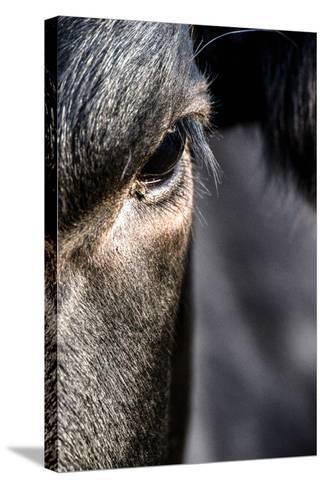 Cow, Detail, Eye-Jule Leibnitz-Stretched Canvas Print