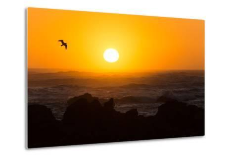 South Africa, Garden Route, Cape Agulhas, Sundown-Catharina Lux-Metal Print