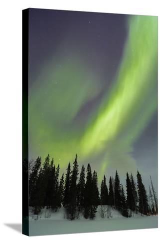 Northern Lights in Winter, Aurora Borealis, PyhŠ-Luosto National Park, Luosto, Lapland, Finland-P. Kaczynski-Stretched Canvas Print