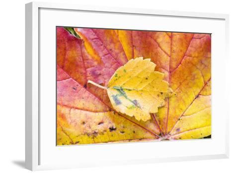 Autumn Leaves, Close-Up-Frank Lukasseck-Framed Art Print