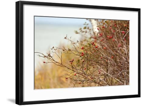 The Baltic Sea, R?gen, Rose Hip Shrub-Catharina Lux-Framed Art Print
