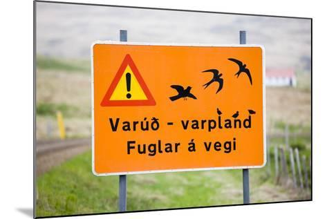 Iceland, Road Sign, Warning 'Low-Flying Birds'-Frank Lukasseck-Mounted Photographic Print