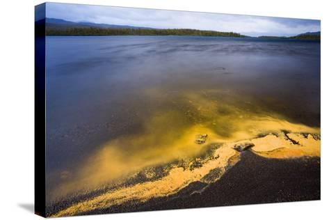 Sweden, Lapland, Lake, Shore, Birch-Pollen, Landscape, Autumn-Rainer Mirau-Stretched Canvas Print